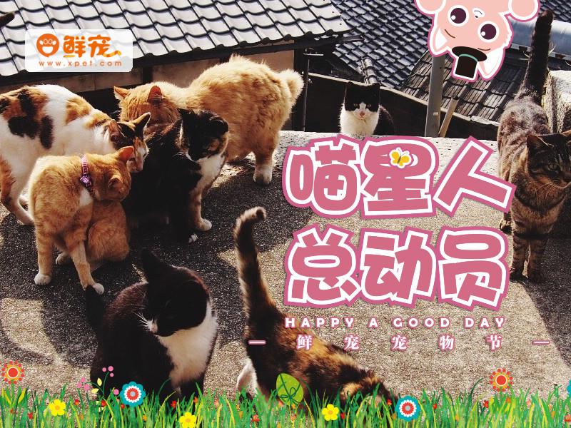 猫咪来啦!